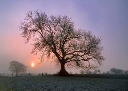 ash-tree-sunrise